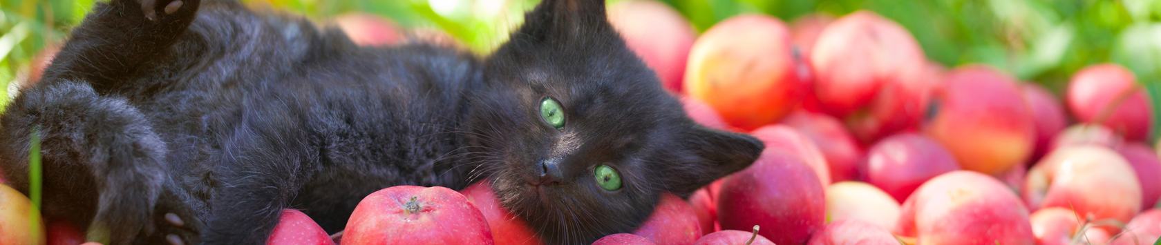 cat laying on apples
