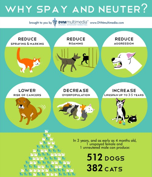 Space and neuter infographic